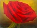 Růže malá - Lenka Zvěřinová